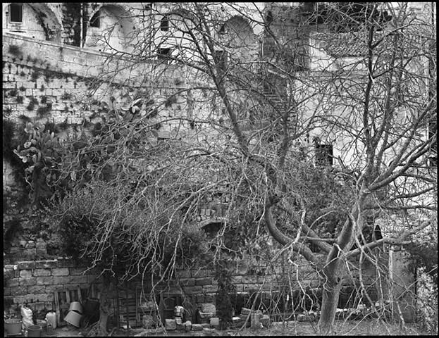 Matera Tree, 2000