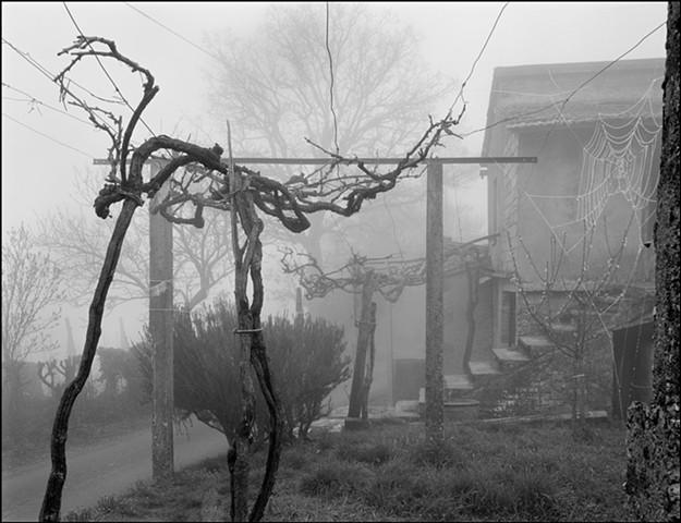 Spider Web, 2006