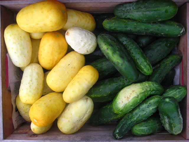 Boothby's Blonde and Marketmore Cucumbers