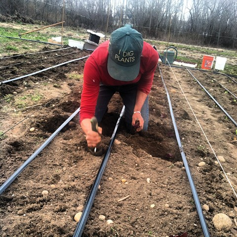 I Dig Plants