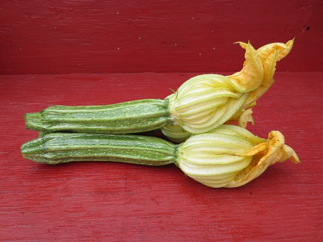 First Harvest - Costata Romanseco Squash with Blossoms