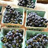Concord Grapes, Briermere Farm