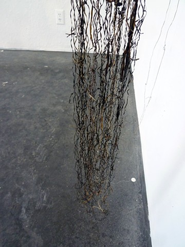 Seaweed Lines