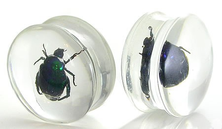 Acrylic Flared Real Beetle Plugs