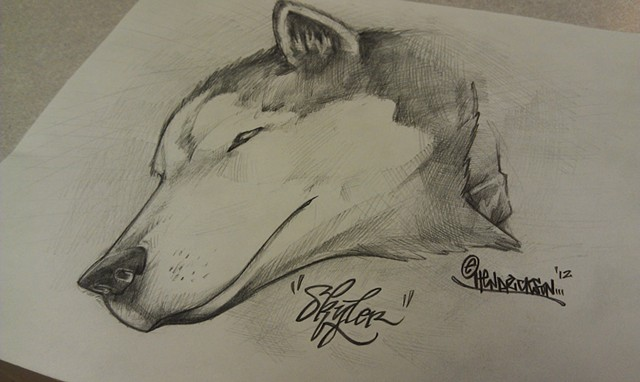 Skyler Husky Drawing