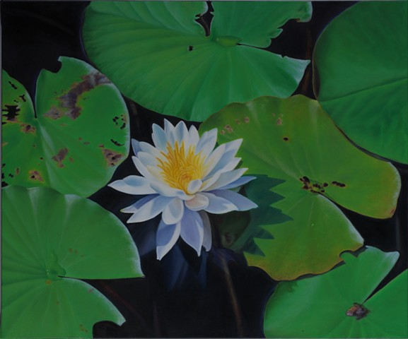 """Water Lilies III, 2010, Oil on canvas, 20"""" x 24"""""""