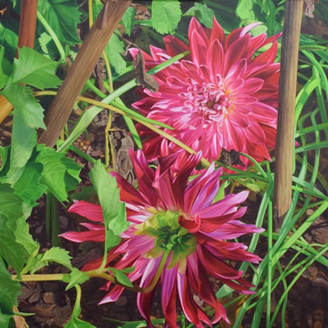 Dahlias After a Storm