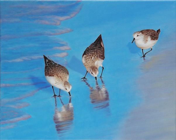 "Sanderlings, 2010, Oil on canvas, 16"" x 20"""