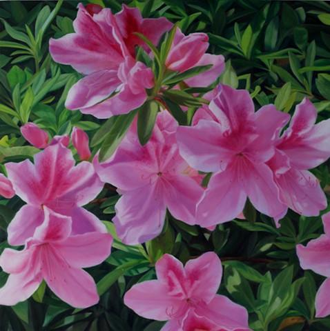"""Azaleas, 2011, Oil on panel, 22"""" x 22"""""""