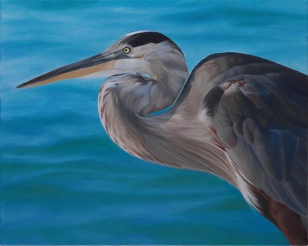 """Blue Heron, 2010, Oil on canvas, 16"""" x 20"""""""