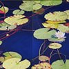 Water Lilies on Western Lake II