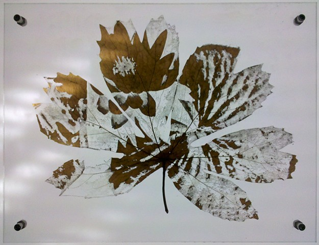 Mayapple leaf laser etched with invasive water lily