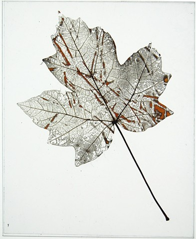 Maple leaf laser etched with rosa multiflora stems