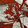Maple Minus Buckthorn
