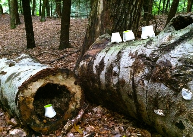 Cups in the woods