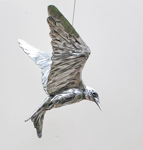 LPCH Project-CA Least Tern