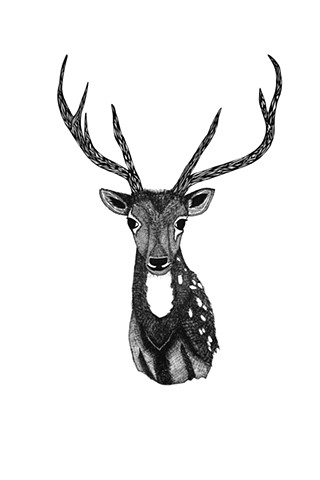 The Hunting Party Series, Deer. Illustration by Dani Green