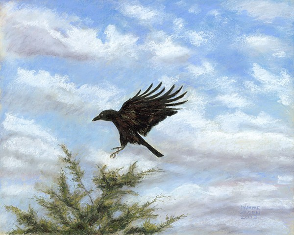 American Crow, Red Cedar, Clouds, Sky