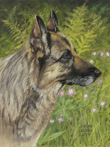 Raisa, German Shepard, Dog, Pet, Memorial