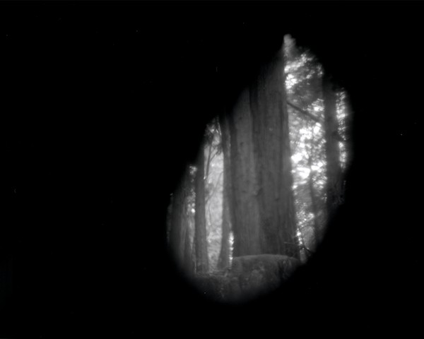 Big Basin Forest, CA: 16x20 from 4x5 Film