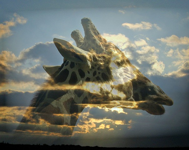 Giraffe Clouds