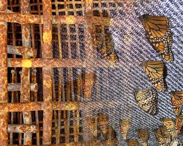Grid Iron Butterflies