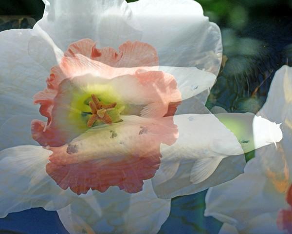 Koi Flower