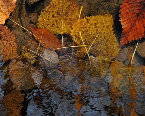 Leaf Immersion