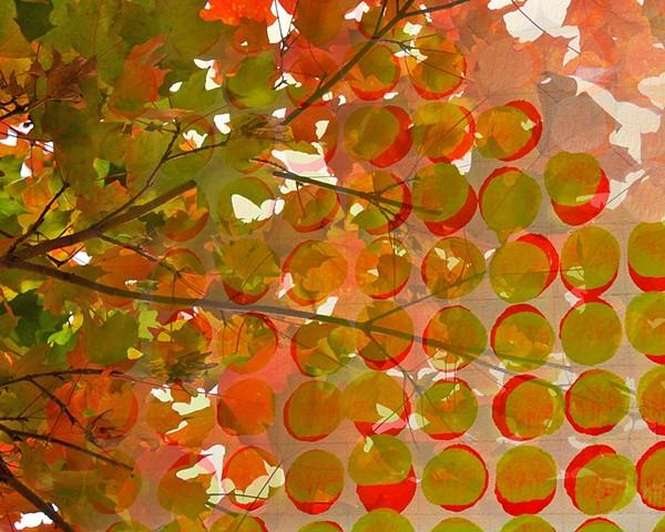 Elementary Leaves