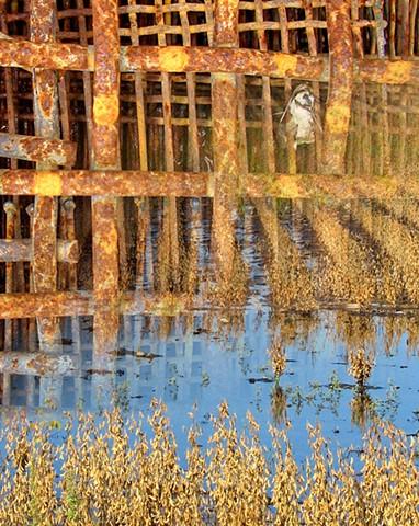 Field Grid Flood