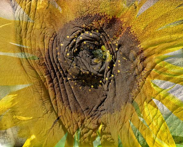 Pachyderm Flower