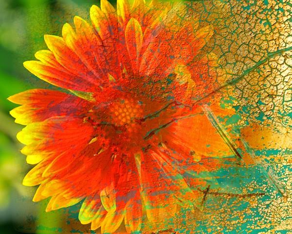 Floral Disintegration
