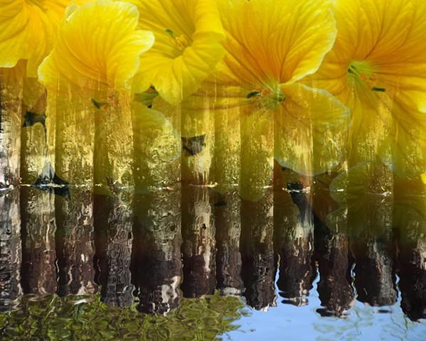 Flower Pond Reflection