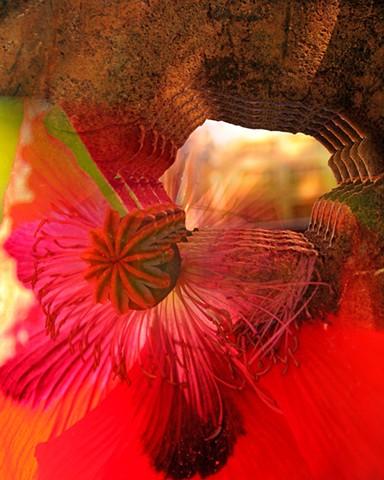 Flower Portal