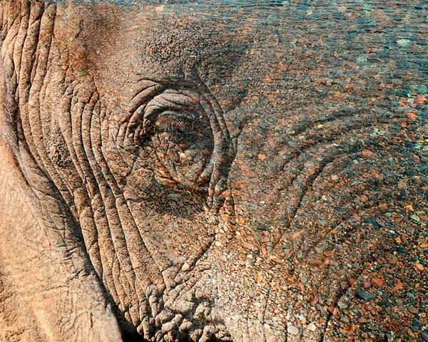 Superior Elephant