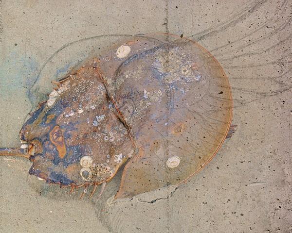 SCAD the Crab God