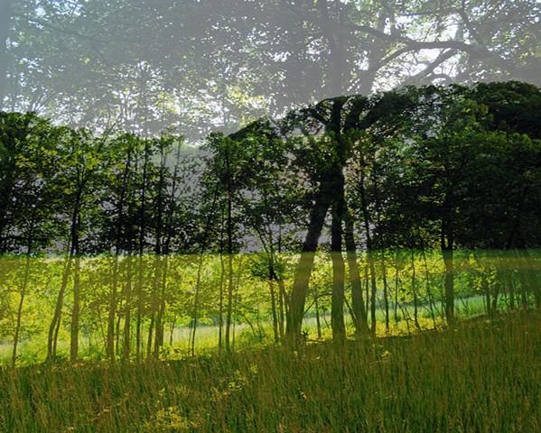 Woods On Woods