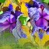 Iris Dissolve