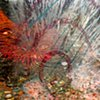 Anemone Dance