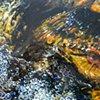 RBNC Creek (Bubbles)