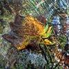 Unnamed Creek (Leaf)