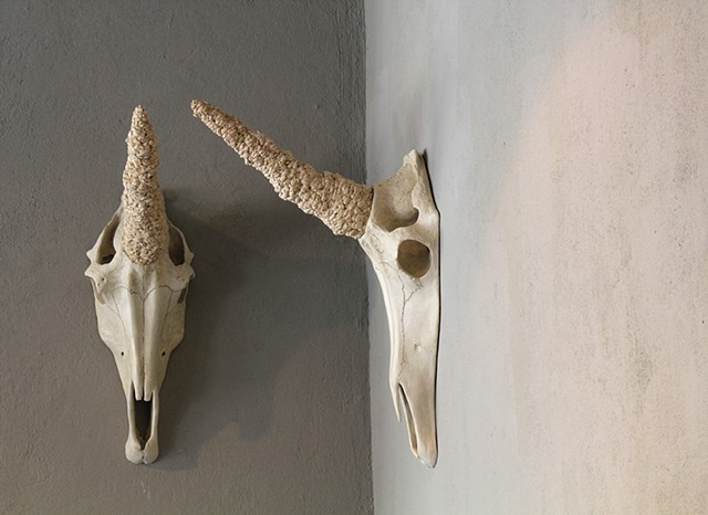 2 clay sculptures by Paul March entitled Juments Dizygotes (translation: identical twin mares), resembling unicorn skulls