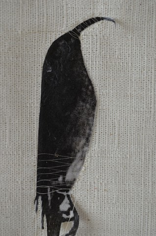 extinct birds, human hair, drawing