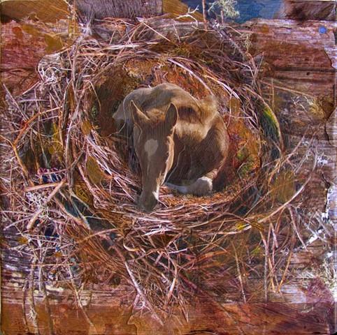 Foal's Nest