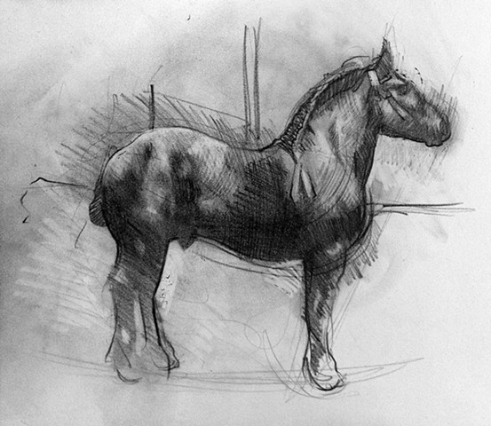 percheron stallion drawing livestock animal