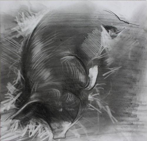 Sleeping Sow