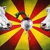 Cow Wedding, Rising Turnip