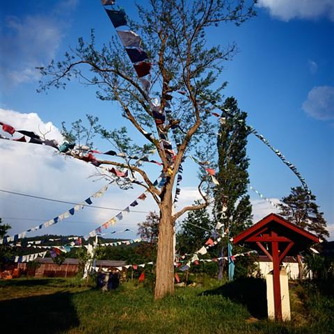 Tree and Prayer Flags, Urgyen Samye Chöling, France, 1991