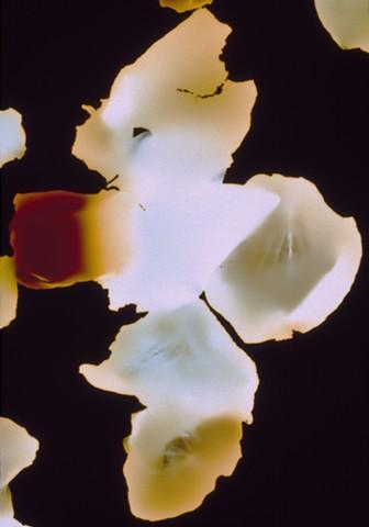 Yellow Petalscape