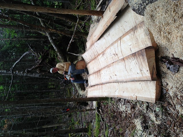 Sprout- slabbing out fallen spruce into boards